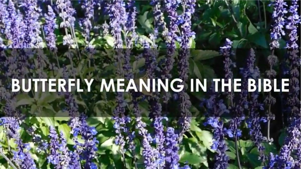 Read more about the article Butterfly: Does It Have a Biblical Meaning? [Explained]
