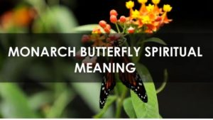 Read more about the article Butterfly: Spiritual Meaning and Symbolism [All You Need To Know]