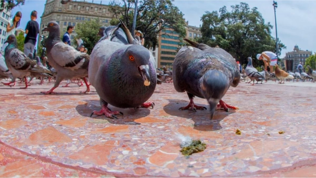 You are currently viewing Bird Poops on you: Meaning? Good Luck? Why? [Explained]