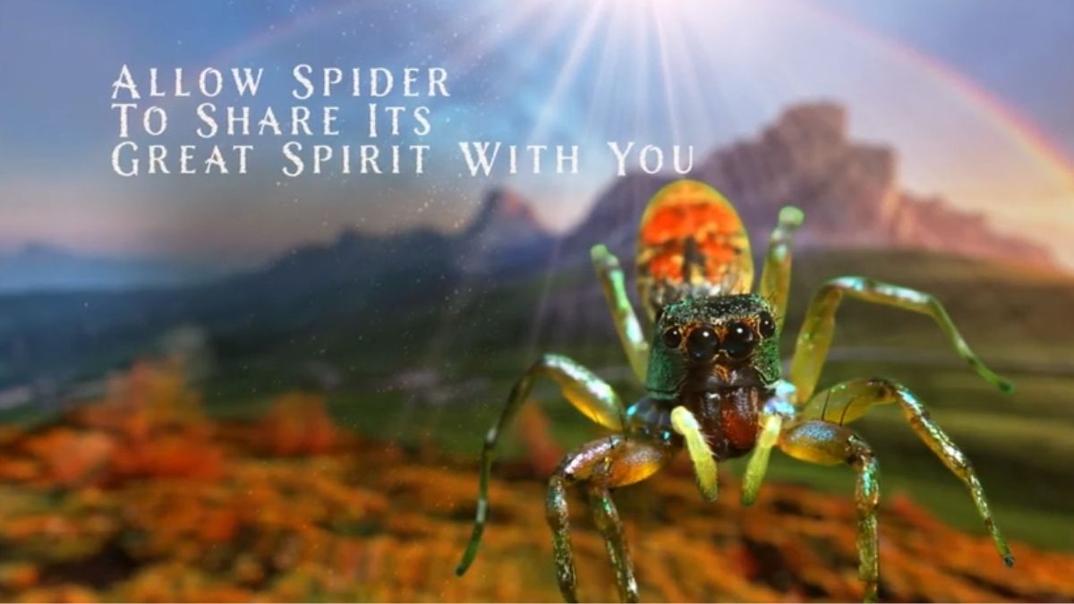 You are currently viewing Spiders: What Is The Spiritual Meaning? [All You Need To Know]